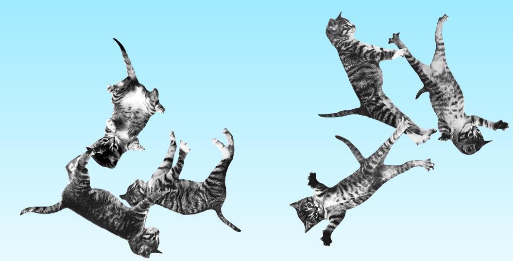 cats bouncing